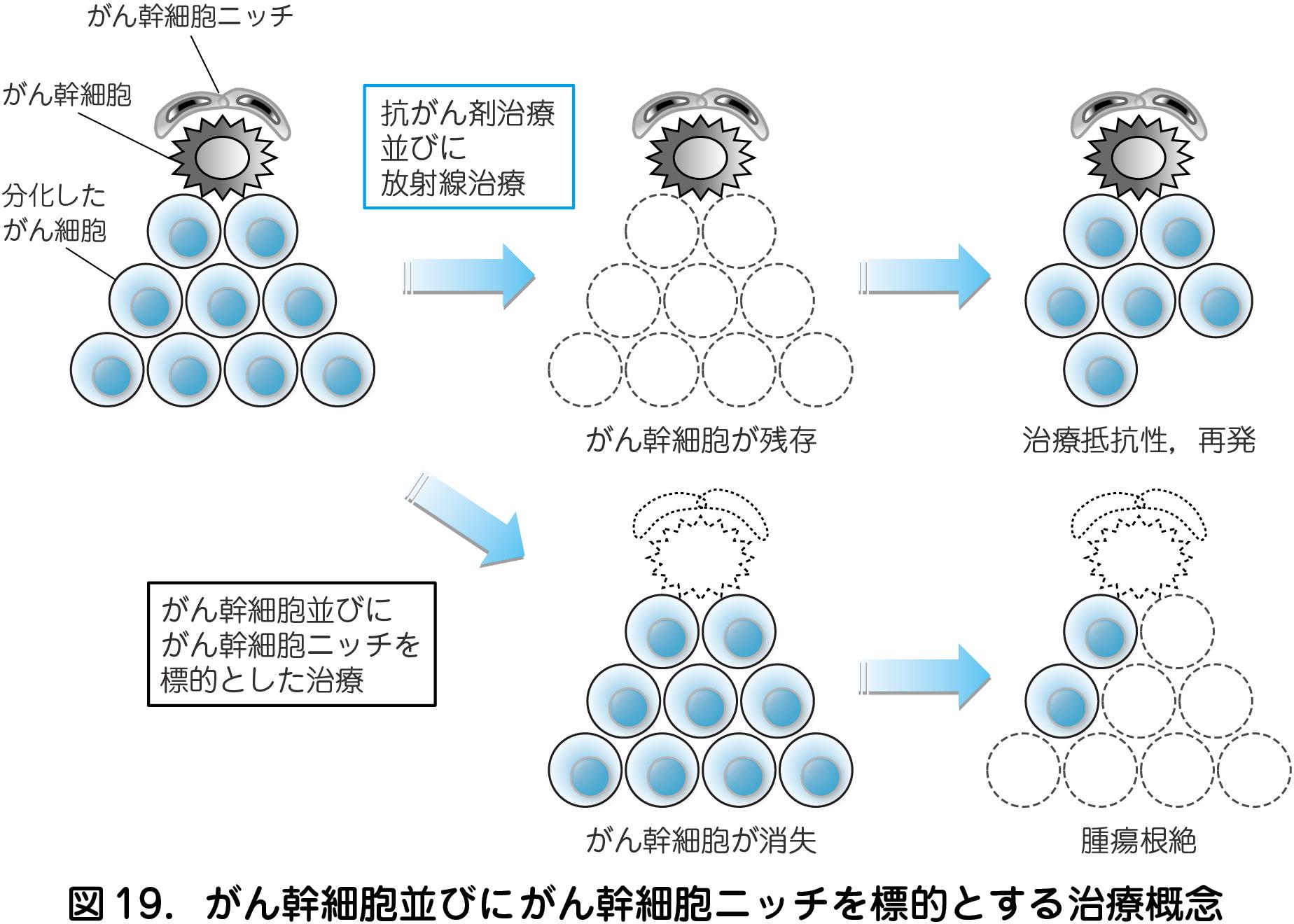 5)がん幹細胞に対する新規標的治療開発(本原剛志) – 日本産婦人科医会